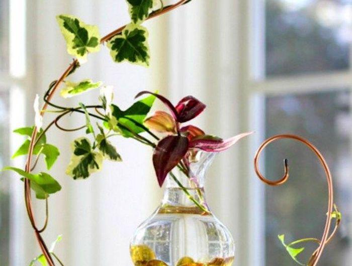 plante aquatique jetez vous l 39 eau en 47 photos plantes aquatiques plantes. Black Bedroom Furniture Sets. Home Design Ideas