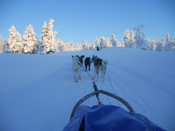 Finland ,Lapland  Husky sled trip