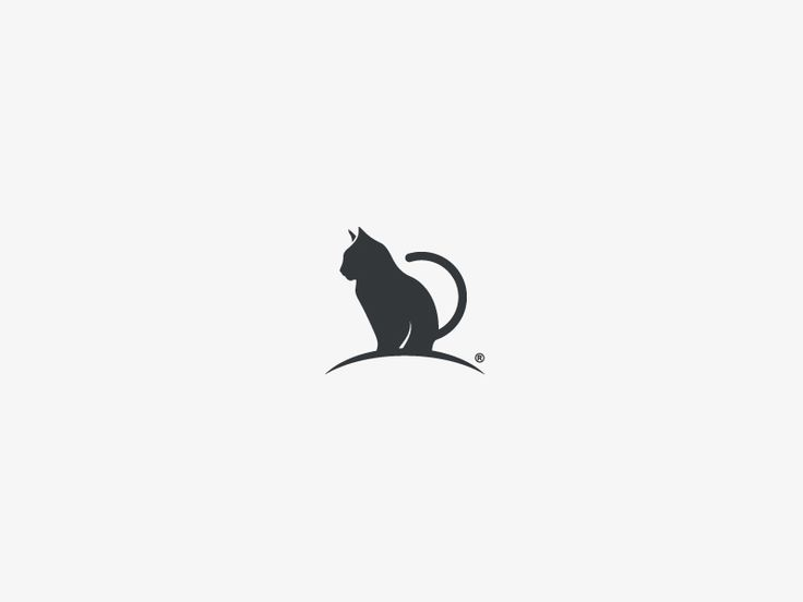 Cat by Javier Torres