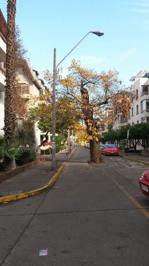 Santiago, arbol en medio de la calle vida!!