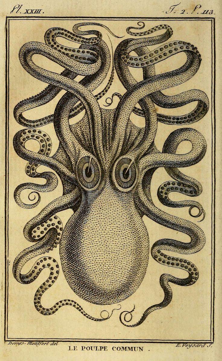 best 25 common octopus ideas on pinterest octopuses beautiful