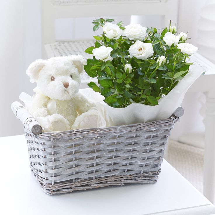 Baby Gift Bouquet New Zealand : This white rose plant and soft teddy bear is the perfect