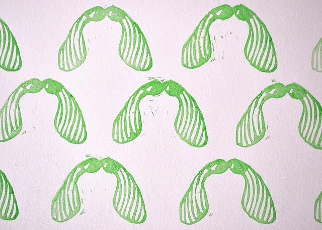 maple seed print.