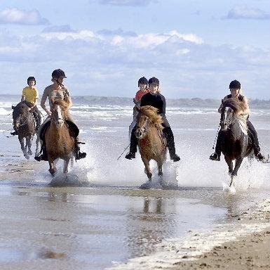 På Hanstholm Camping kan du oppleve ulike typer rideturer i Vigsø Bukts vakre sanddyner.