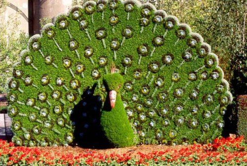 So cool. I wonder how they get the circles to grow in the hedge?