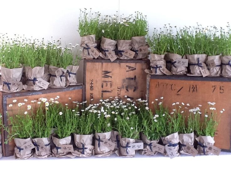 Cute Little Daisy Plants In Paper Bags With Thank You