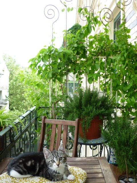 geliebtes Balkonien mit der kleinen Jenne :) von MiMaMeise