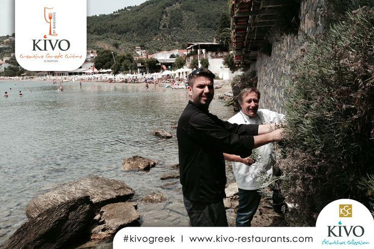 Our chefs, Yiannis Baxevanis and Exarchos Delimpasis, gather samphire, which grows on the sea rocks in Skiathos! #kivo #kivorestaurants #kivogreek #baxevanis #Greece #skiathos #restaurant #gastronomy #food #wine http://kivo-restaurants.com/greek-cuisine/ http://www.kivohotel.com/