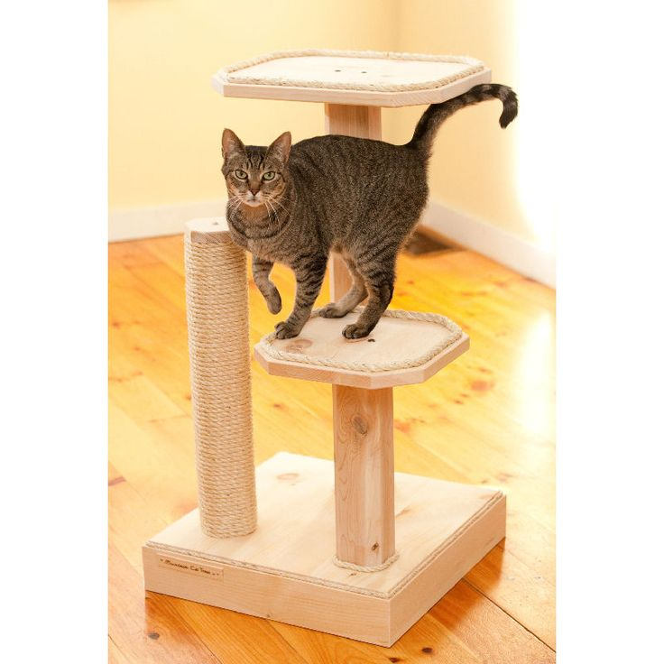 Kind of Wood for wooden cat tree - http://phoc.taylorectorstudios.com/kind-of-wood-for-wooden-cat-tree/ : #CatTrees Wooden cat tree are cat accessories developed for indoor cats. These trees provide climbing activities and perches for the cat when it does not have access to the actual tree outdoors. Several types of wood used for cat tree. What kind of wood is linked to quality, durability and price of the...