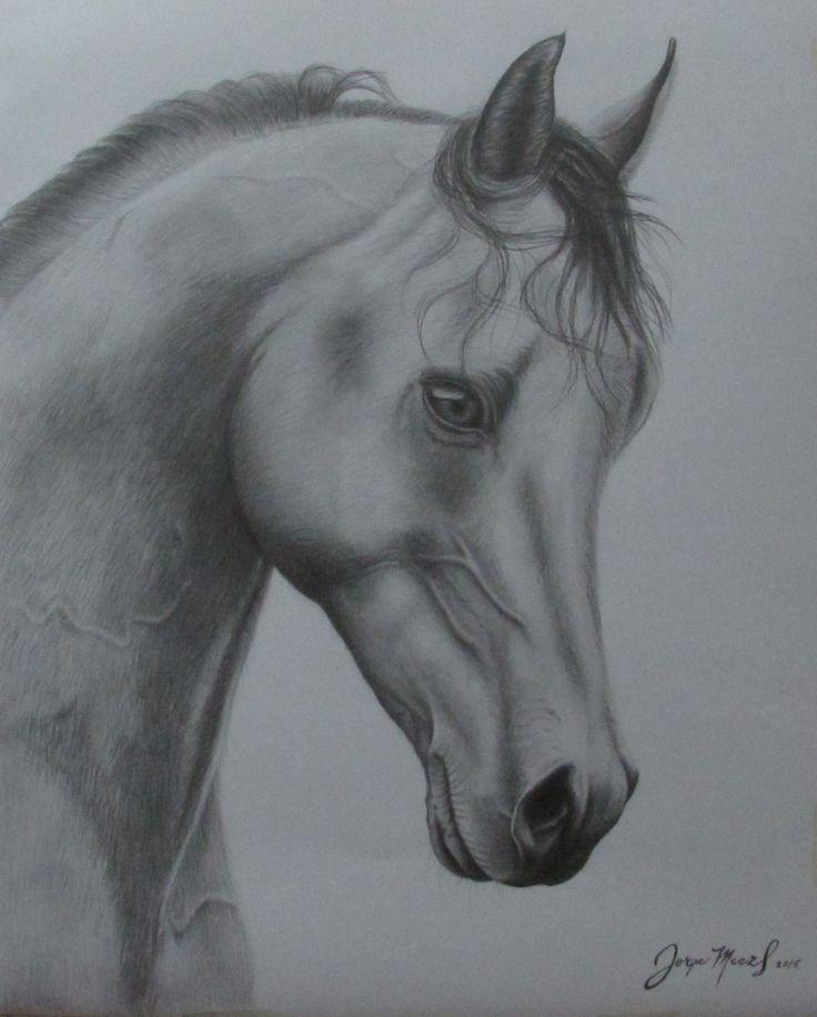 Dibujo. lápiz grafito. caballo