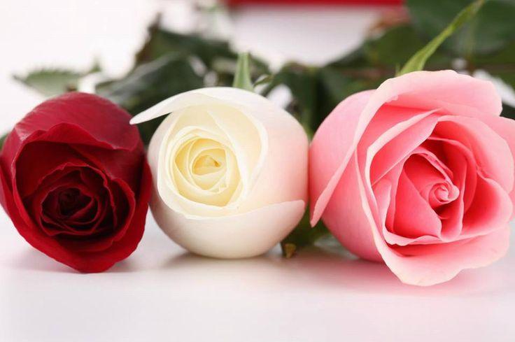 Significado del COLOR y la CANTIDAD de las Rosas.