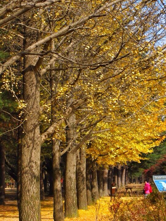 Autumn in Seoul, South Korea