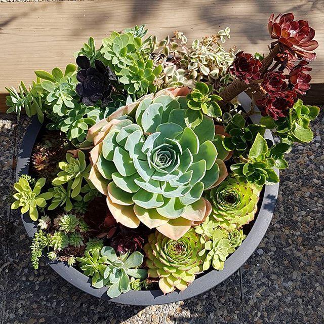 Epingle Sur Succulents Skalnicky
