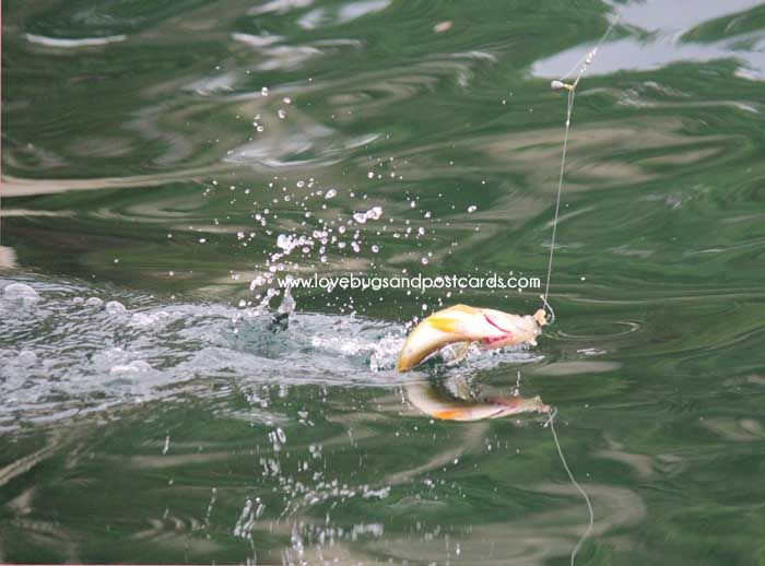 37 best images about utah 39 s hidden treasures on pinterest for Best fishing in utah