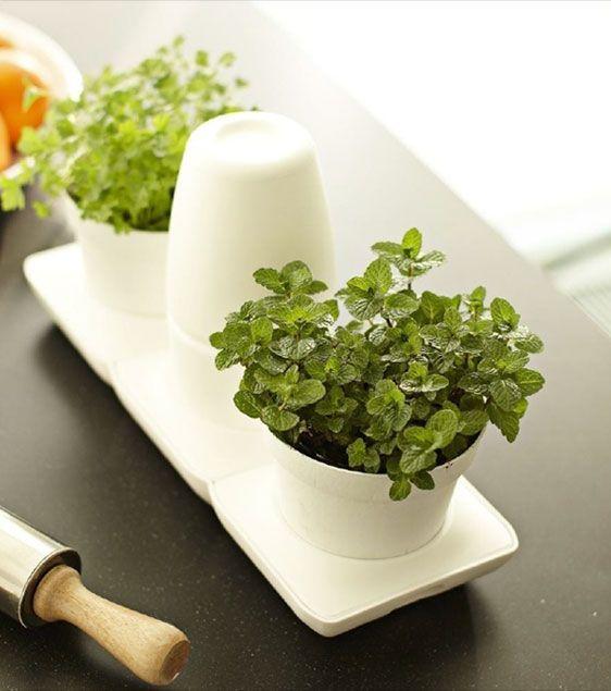 29 best minigarden basic sistema cultivo images on - Plantas aromaticas en la cocina ...
