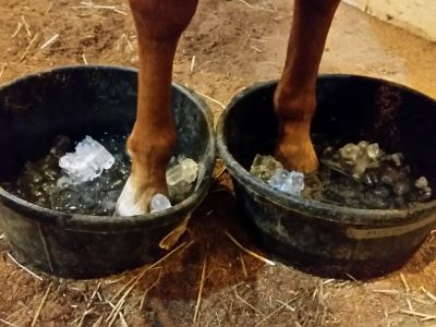 How to catch laminitis early - and save your horse a ton… http://www.proequinegrooms.com/index.php/tips/grooming/watching-out-for-laminitis/