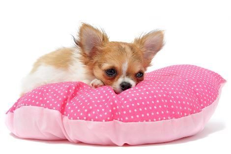 The 9 Cutest Small Dog Breeds of the World  https://www.dogisto.com/cutest-small-dog-breeds-worldwide/ #Dogs #Puppy #Puppies #Smalldog