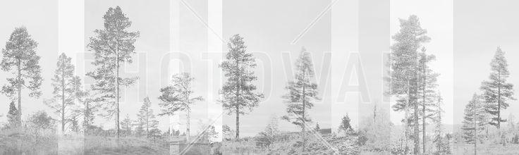 Panorama - Grey - Tapetit / tapetti - Photowall