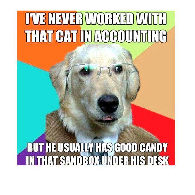 Insane Hilarious Dog Memes Dog Meme Youtube Dog Memes Funny Dog Memes Funny Dogs