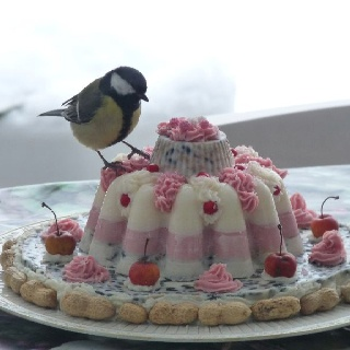 Taart! Ab amazing bird seed cake!! I'm so making one next year!