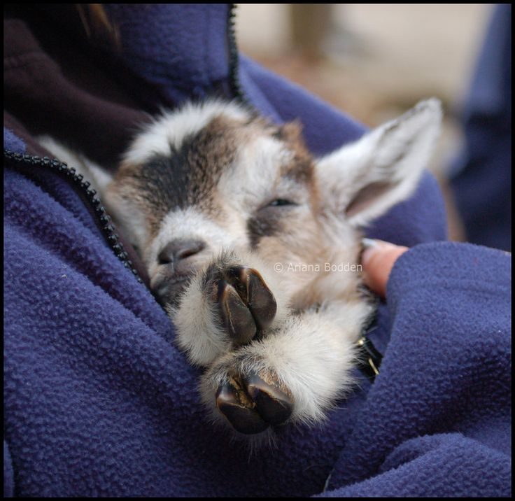 All snuggled in and sleeping while being held