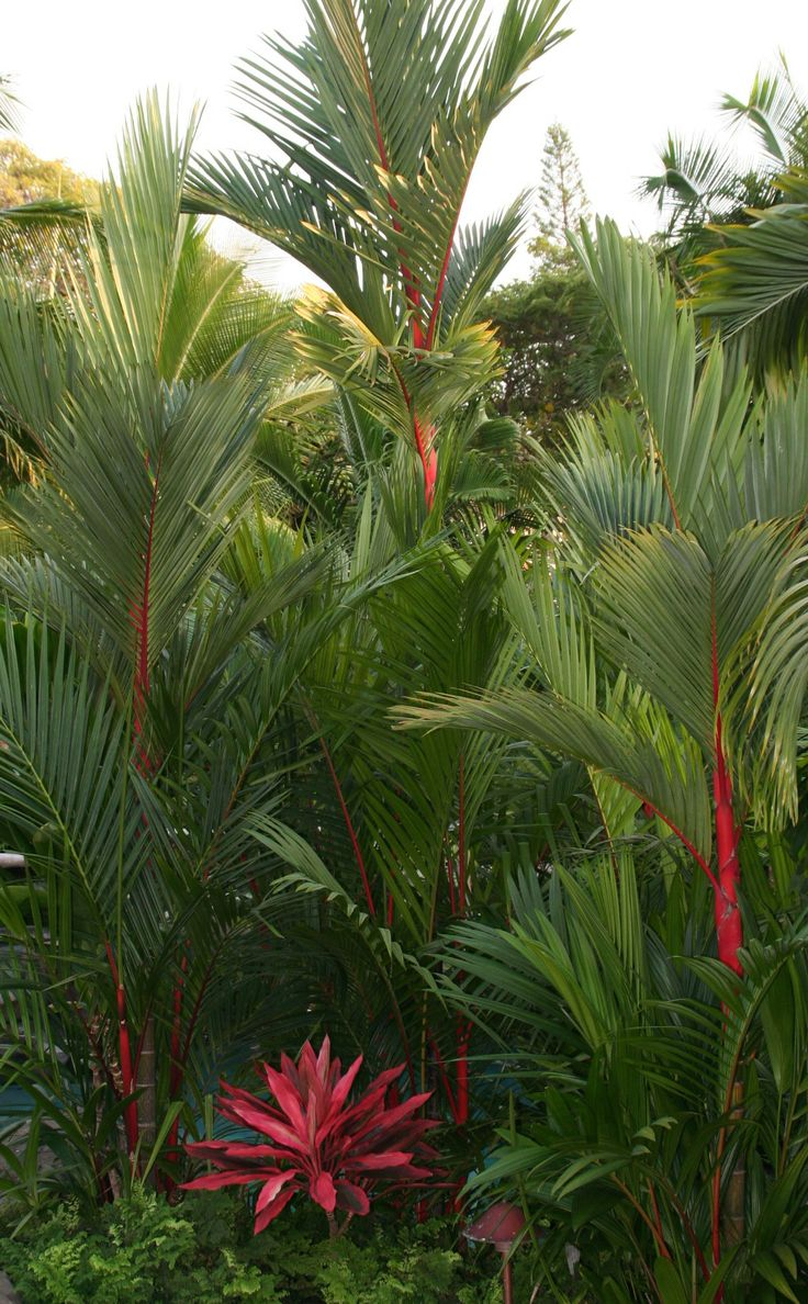 68 best Tropical images on Pinterest | Tropical, Tropical plants and ...