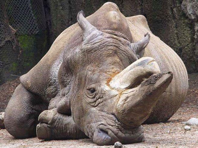 Mercado negro: venta de animales en web   http://elheraldoslp.com.mx/2014/07/mercado-negro-venta-de-animales-en-web/
