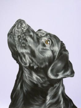 Carol Gillan Animal Artist & Pet Portraits - FOR SALE - DOG PORTRAITS IN OIL