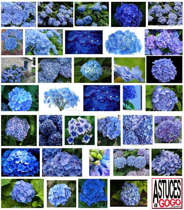 les 25 meilleures id es de la cat gorie hortensia bleu sur pinterest bouquet de hortensia bleu. Black Bedroom Furniture Sets. Home Design Ideas
