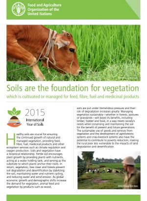 Healthy soils are crucial for ensuring the continued growth of natural and managed vegetation, providing feed, fibre, fuel, medicinal products and other ecosystem services such as climate regulation and oxygen production.