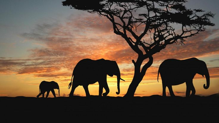 Top 4 myths about elephants debunked: http://www.holidaybug.co.za/top-4-myths-about-elephants-debunked/