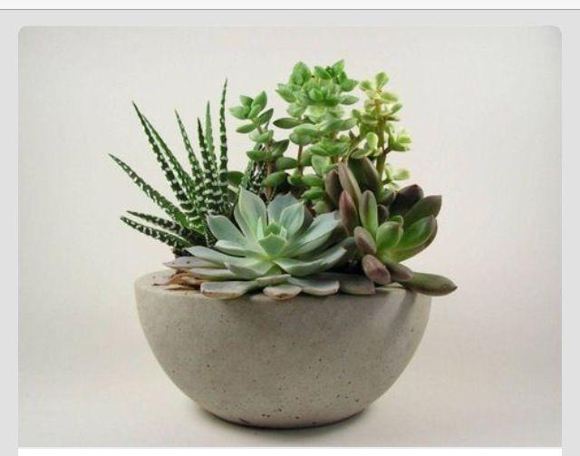 Die 73 besten Bilder zu succulents auf Pinterest Schreibtisch