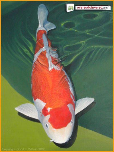25 melhores ideias sobre peixes ex ticos no pinterest for Como criar peces koi
