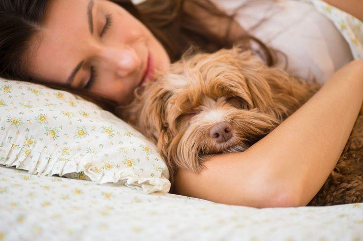 Ничто, абсолютно ничто не может заменить здоровый сон. Поверхностный сон повышает уровень кортизола — гормона стресса. А в будущем он может стать причиной появления различных заболеваний.  SIESTA разработала ортопедические матрасы и подушки для самого комфортного сна на свете.