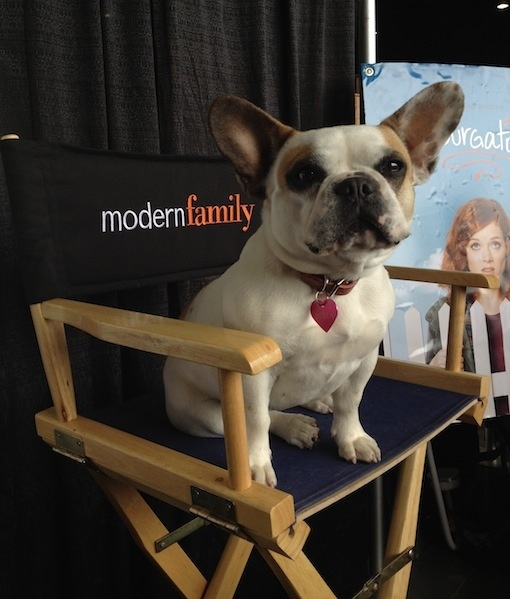 33 best Stella images on Pinterest | French bulldogs, Modern family ...