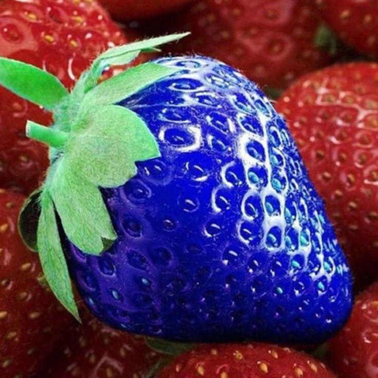 100pcs Blue Strawberry Seeds Vegetable Vitamin Fruit Plants Home Garden Decor #Yanqueens