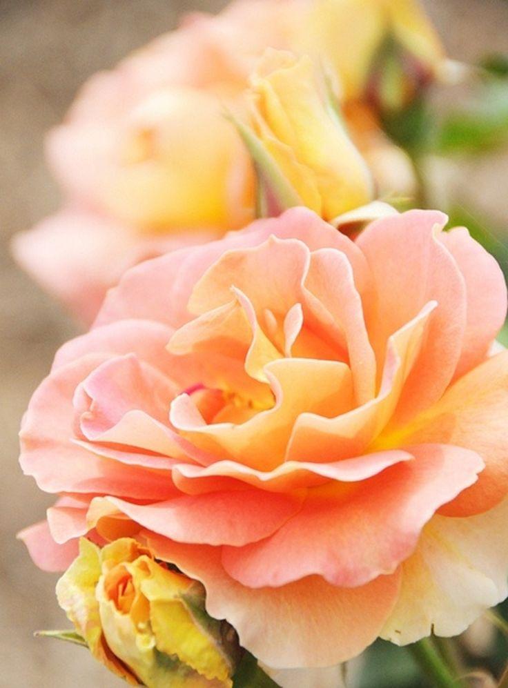 038 Flowers Orange