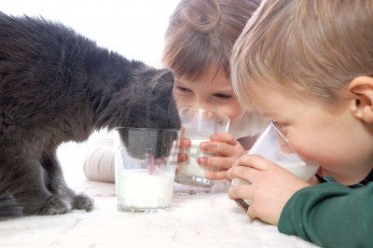 Все любят молоко :)