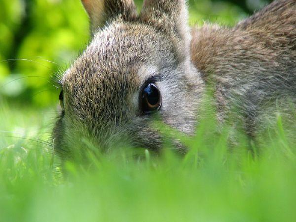 Bunny's eye view.: Gardens Ideas, Yard, Compost Teas, Easter Bunnies, Peter Rabbit, Card, Cayenne Peppers, Peek A Boo, Photo