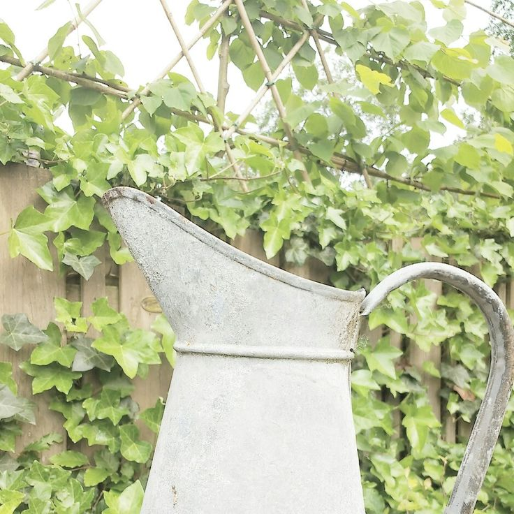 My own Picture / IG: lifepassionn / garden