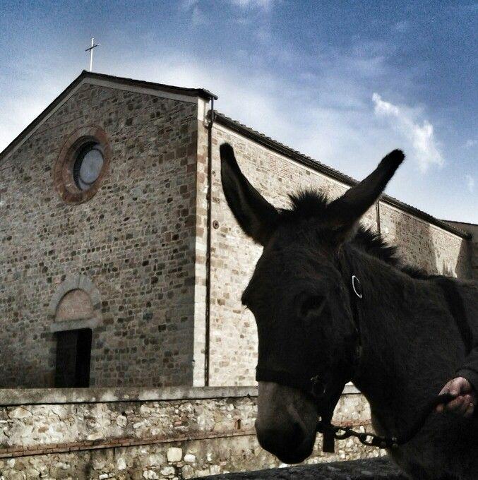 S. Antonio, benedizione degli animali presso il Santuario Santa Maria delle Grazie a Campagnatico.