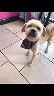 Pug/Shih Tzu Mix Dog for adoption in Carlsbad, California - Burt