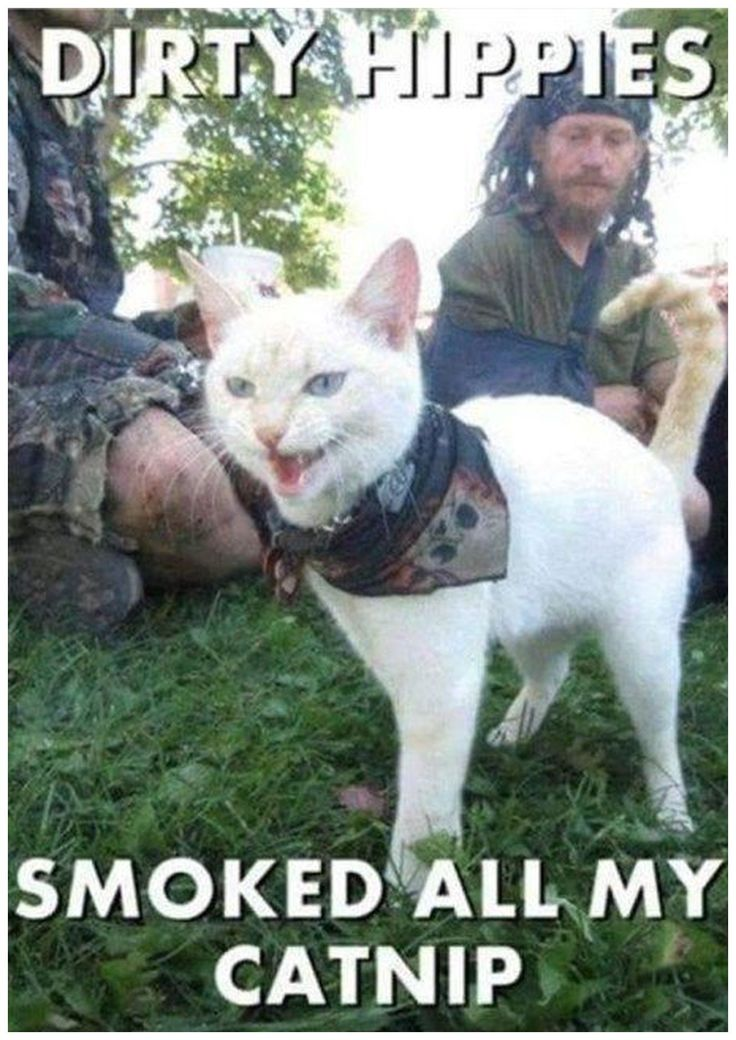 TOP 32 Funny Cats Pictures