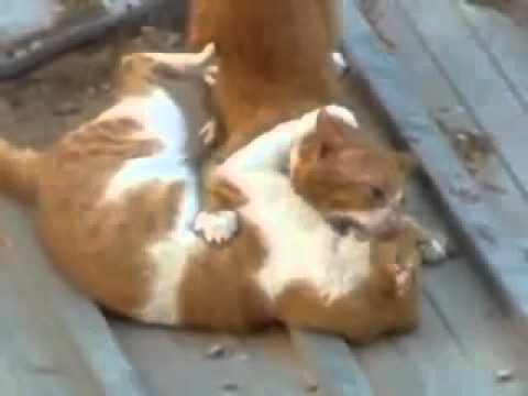 https://www.youtube.com/watch?v=mXQXxvvLynI 10 minutes with cat fight : Cat fighting meme sound lively. Synthesis cats to cats, cats with dogs....win or die with images horror from attacks.Funny moments Video Hd 1080p for you...