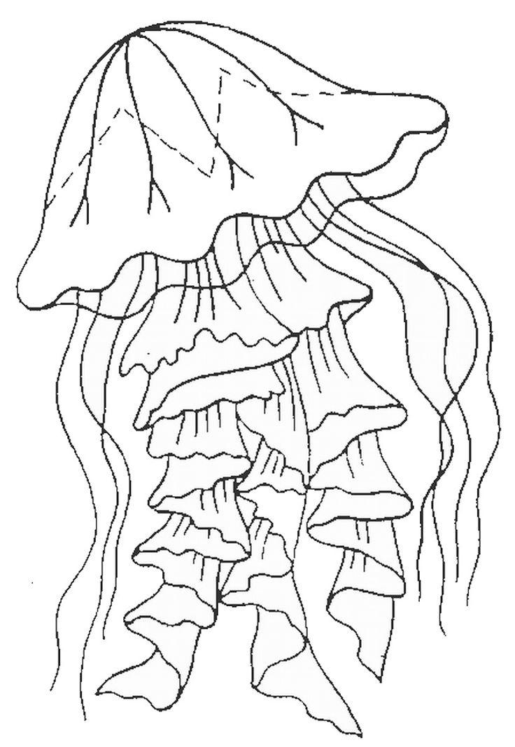медуза раскраска