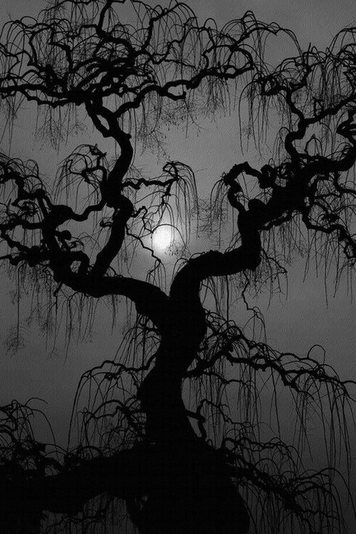 The Moon Goddess beckons you through the trees. http://www.duskyswondersite.com/tag/amazing-trees/