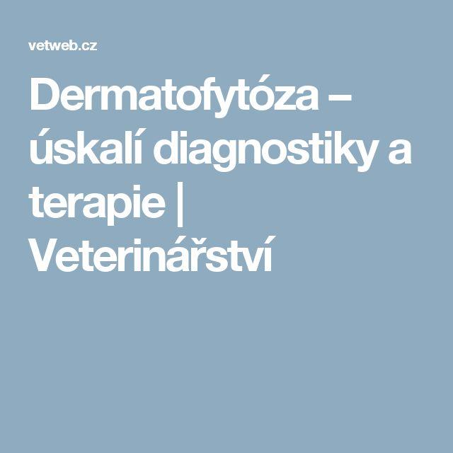 Dermatofytóza – úskalí diagnostiky a terapie | Veterinářství