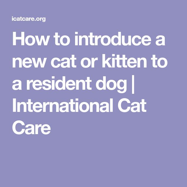 How to introduce a new cat or kitten to a resident dog | International Cat Care