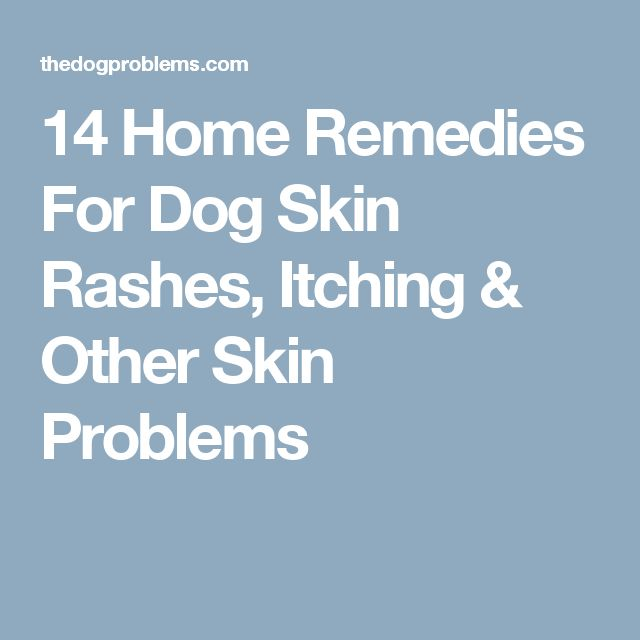 14 Home Remedies For Dog Skin Rashes, Itching & Other Skin Problems