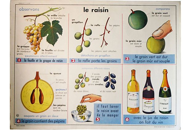 Le Raisin (French Wine) vintage French educational poster